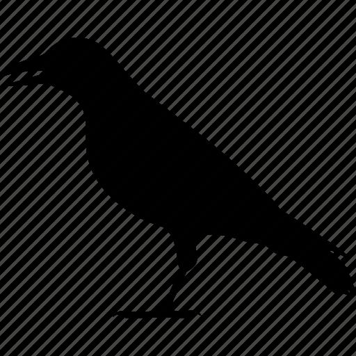 bird, corvidae, corvus, crow, jackdaw, raven, rook icon