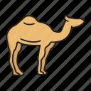 camel, desert animal, dromedary, hump, camelus, humps, mammal