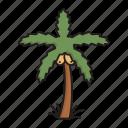 palm tree, arecaceae, tree, desert, date palm, nature
