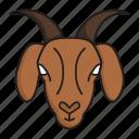 bakra, chevon, head, goat, qurbani, eid festival, sacrifice