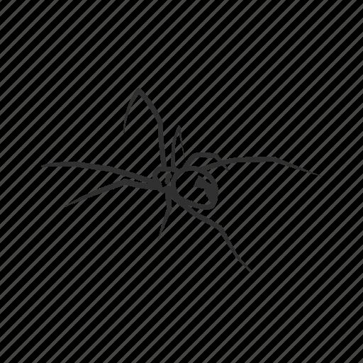 Arachnid, black widow, poisonous spider, spider, big spider, deadly spider, latrodectus × icon - Download on Iconfinder