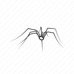 arachnid, big spider, bug, charlottes web, daddy long legs, opiliones × ×, spider icon