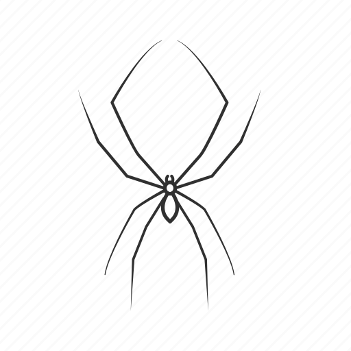 arachnid, bug, charlottes web, daddy long legs, opiliones ×, small spider, spider icon