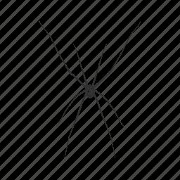 arachnid, big spider, charlottes web, daddy long legs, long leg spider, opiliones × ×, spider icon