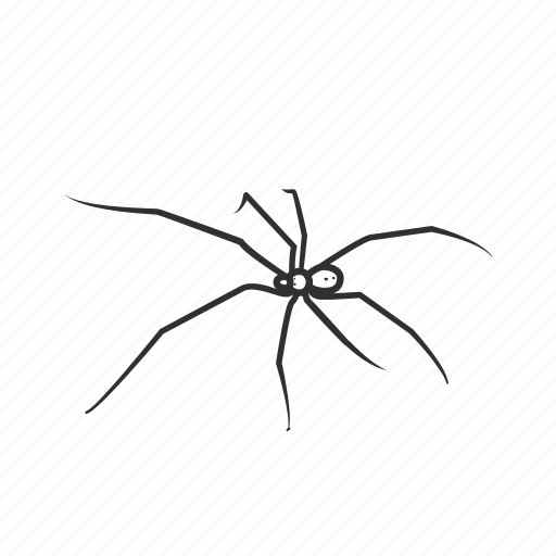 Arachnid, daddy long legs, spider, harvestmen, opiliones, small spider icon - Download on Iconfinder