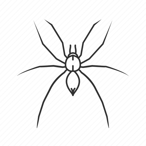 arachnid, big spider, black widow, bug, common spider, daddy long legs, spider icon