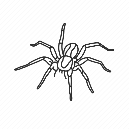 arachnid, big spider, hairy spider, poisonous spider, tarantula, theraphosidae icon