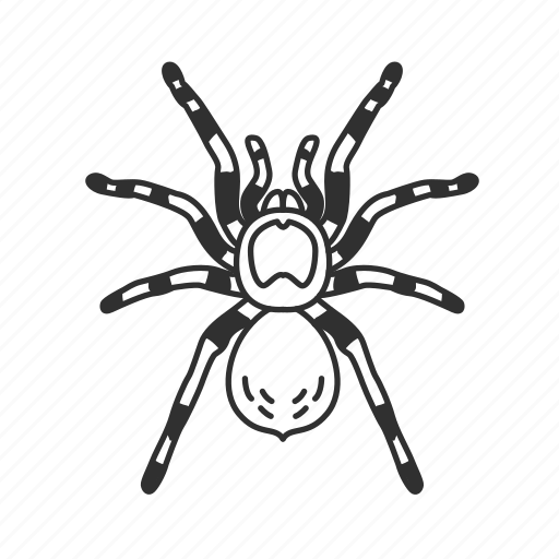 arachnid, big spider, bug, hairy spider, poisonous spider, tarantula, theraphosidae × icon