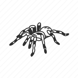 arachnid, big spider, bug, hairy spider, poisonous spider, tarantula, theraphosidae × icon