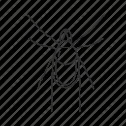 arachnid, arachnids, bug, mite, pest, tick icon