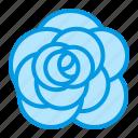 aroma, flower, rose