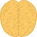 brain, head, human brain, human mind, mind icon