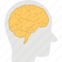genius mind, human brain, human head, human mind, natural intelligence icon