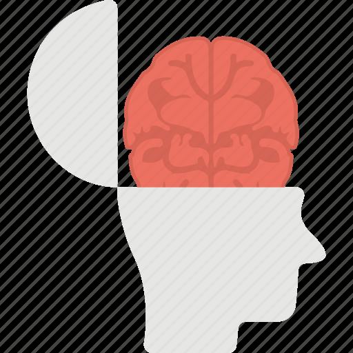 brain, human brain, human head, intelligence, open mind icon