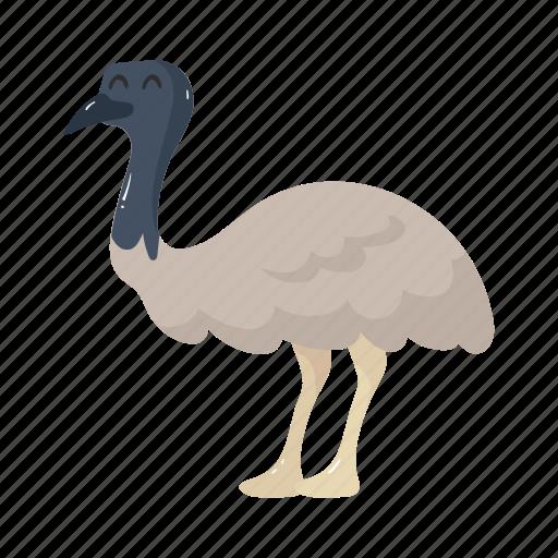 animal, australia, bird, colorful, emu, landmark, object icon