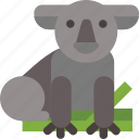animal, australia, koala
