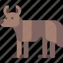 animal, australia, dingo icon
