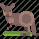 animal, australia, kangaroo icon
