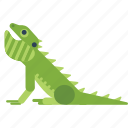 animal, australia, lizard icon