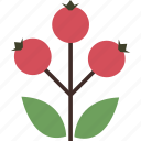 autumn, berry, canker-rose, dog-rose icon