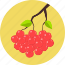 autumn, cake, cherry, dessert, fresh, fruit, sweet icon