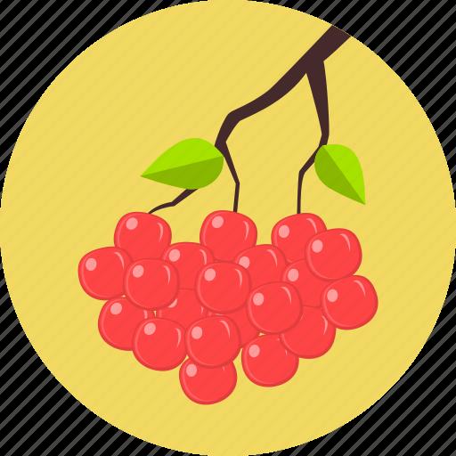autumn, cake, cherry, dessert, fresh, fruit, sweet icon