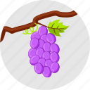 autumn fruits, grapes, vine, vineyard icon