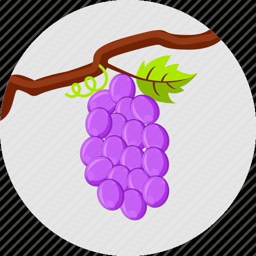 autumn fruits, grapes, vine, vineyard icon