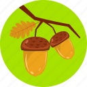 acorn, autumn, branch, clubs, hazels, nature, tree icon