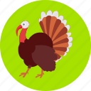autumn, bird, colored, peacock, peafowl, poultry, turkey icon
