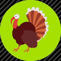 autumn, bird, colored, peacock, peafowl, poultry, turkey icon