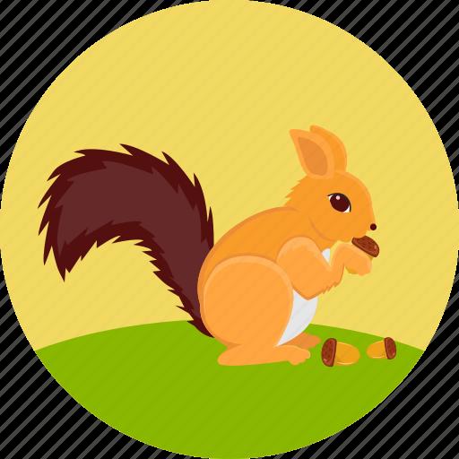 animal, autumn, herbivore, nature, nuts, rodent, squirrel icon