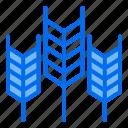 grain, wheat, season, autumn