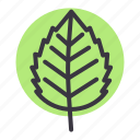 autumn, birch, elm, fall, leaf, nature, season icon