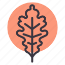 autumn, fall, garden, leaf, nature, oak, season icon