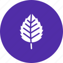 autumn, birch, elm, fall, leaf, nature, season