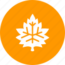 autumn, fall, garden, leaf, maple, nature, season