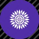 blossom, chrysanthemum, daisy, flower, spring, sunflower, thanksgiving
