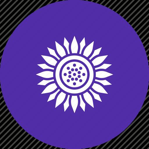 blossom, chrysanthemum, daisy, flower, spring, sunflower, thanksgiving icon