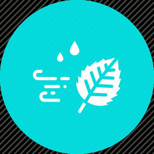 autumn, fall, leaf, season, weather, wind, windy icon