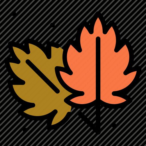 autumn, leaf, nature, plant, weather icon