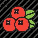 autumn, berry, cranberry, fruits, harvest