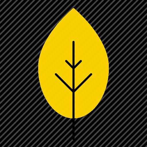 autumn, fall, hornbeam, leaf, leaves, nature, tree icon