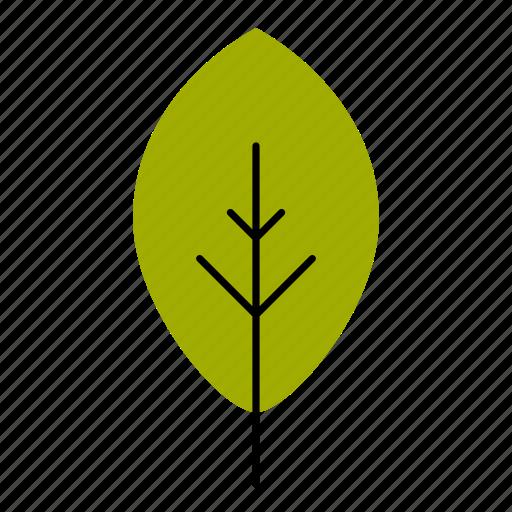 autumn, fall, leaf, leaves, nature, tree, walnut icon
