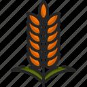 rice, barley, branch, food, leaves, wheat