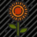 sunflower, blossom, botanical, flower, nature