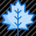 meple, leaf, autumn, fall, garden, nature, plant