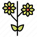 chrysanthemum, flower, flowers, garden, organic, plants icon