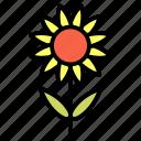 decoration, flower, gardening, organic, plant, sunflower