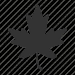 autumn, canada, fall, leaf, leave, maple, nature icon
